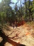 gorgeous Centennial Forest!